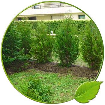 Plantation Ange Jardin