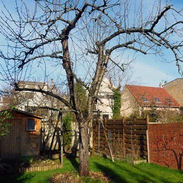 Abattage d'arbres Clamart par Ange Jardin