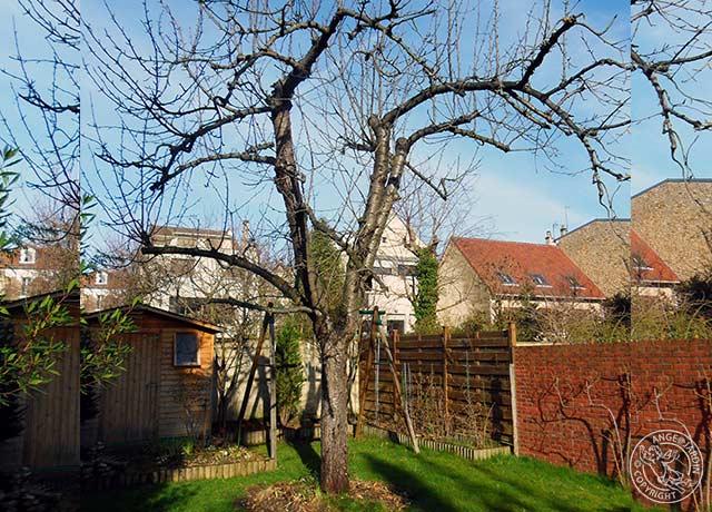 elagage arbre clamart