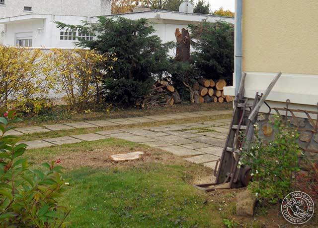 Abattage Ange Jardin Ris-Orangis